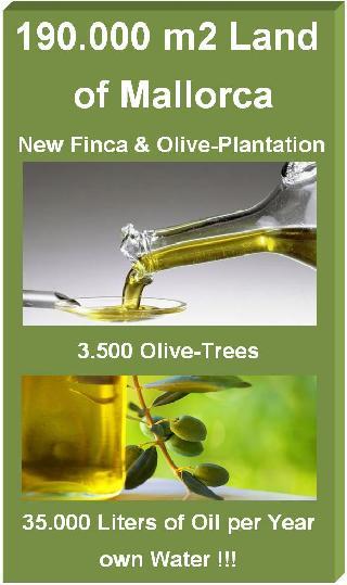 190.000 m2 Oliven-Öl Landgut mit neuer Finca 220 m2 bezugsfertig bis 550 m2 erweiterbar als Villa